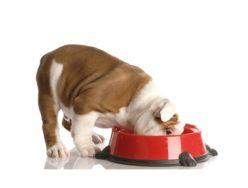 Консервирана кучешка храна