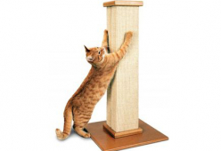 Котешки аксесоари