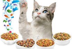 Котешки храни и аксесоари