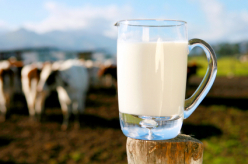 Млека