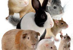 Храни за малки животни