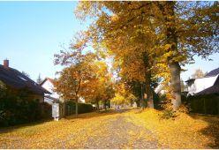 Как да подготвим дома си за есента