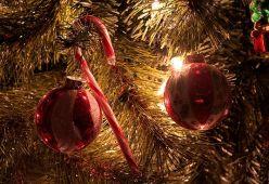 Любопитни факти за Коледа